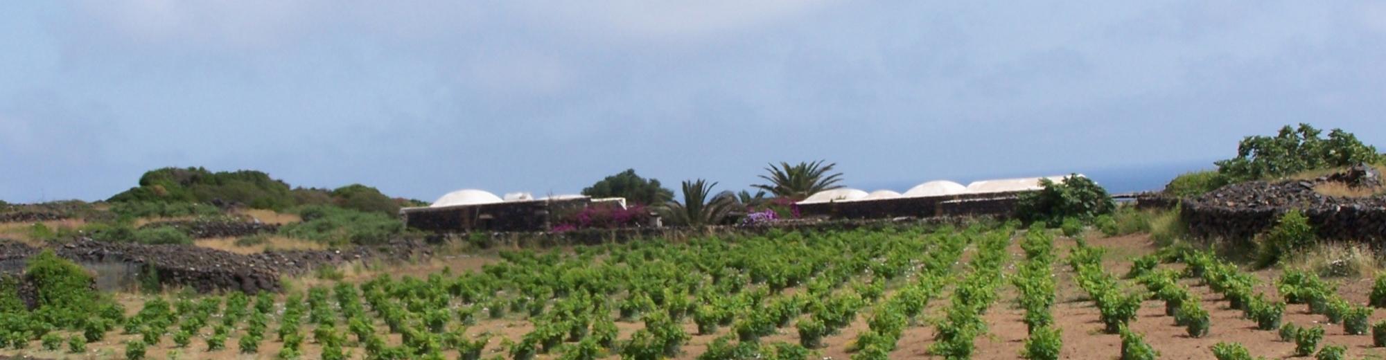 Azienda vitivinicola di Pantelleria