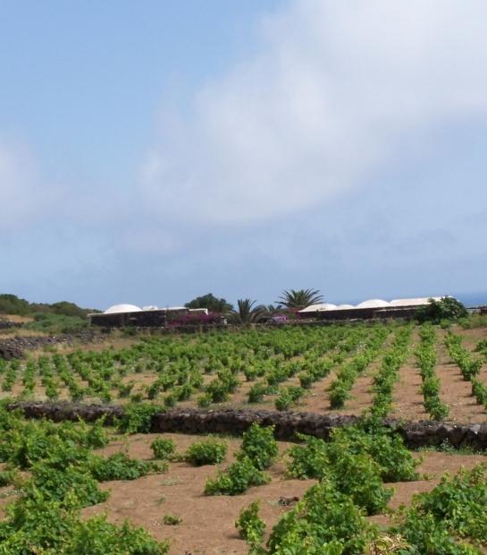 Pantelleria winery
