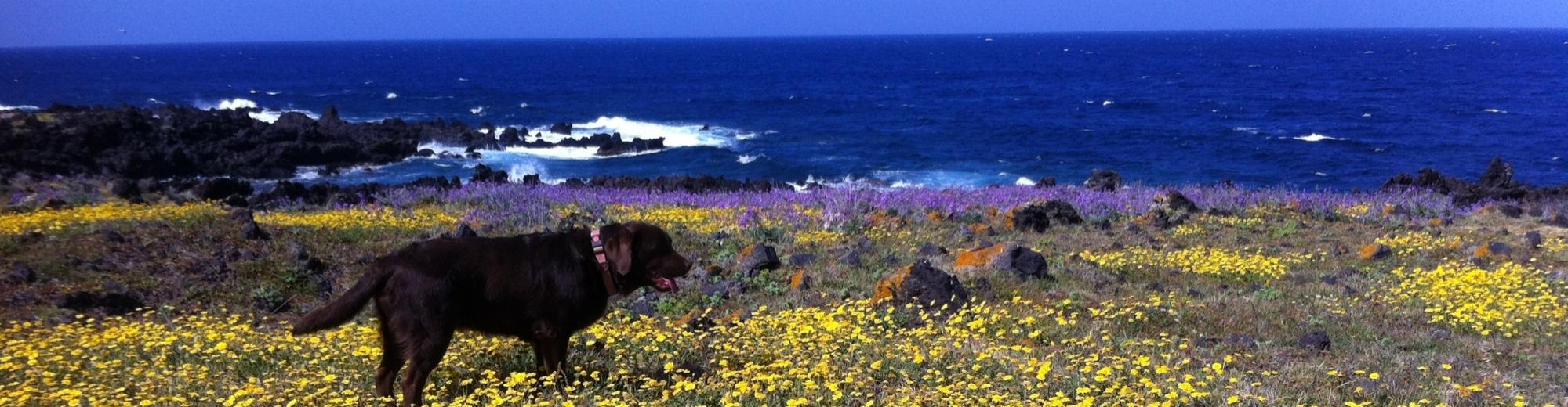 passeggia con il tuo amico a 4 zampe in uno dei sentieri del Parco Nazionale di Pantelleria