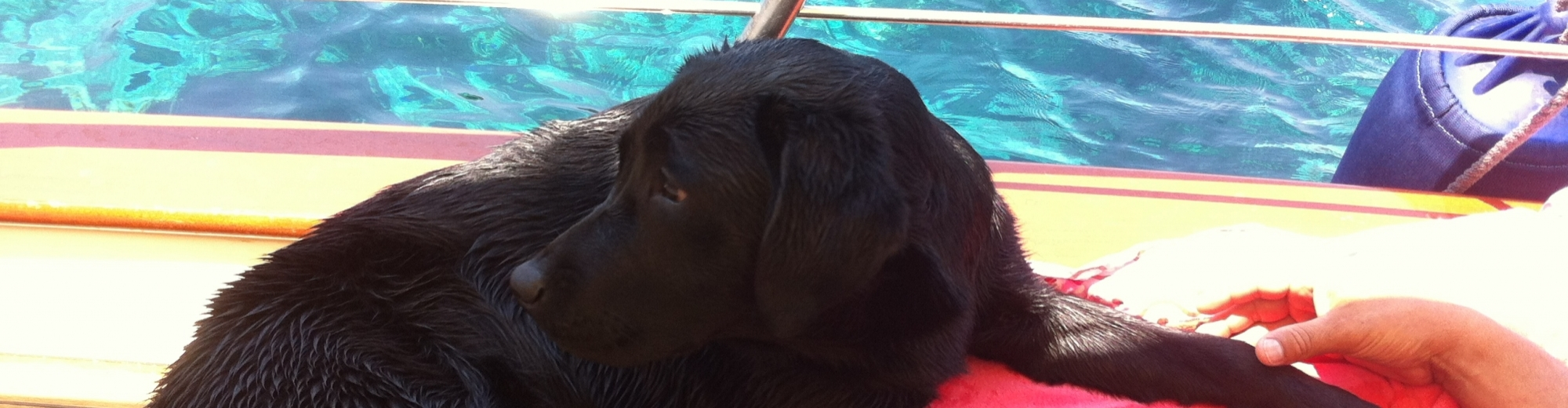 Disponibili noleggio barche pet friendly