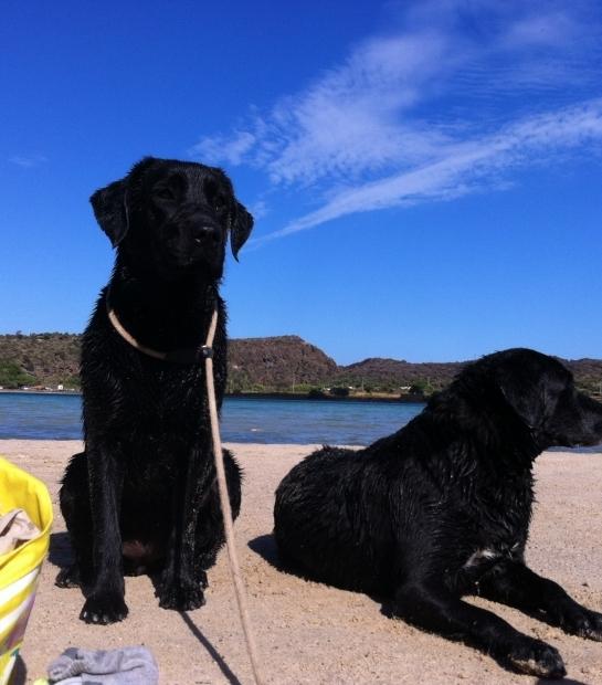 Isola di Pantelleria perfetta per stare in compagnia dei vostri amici a 4 zampe: qui al Lago di Venere